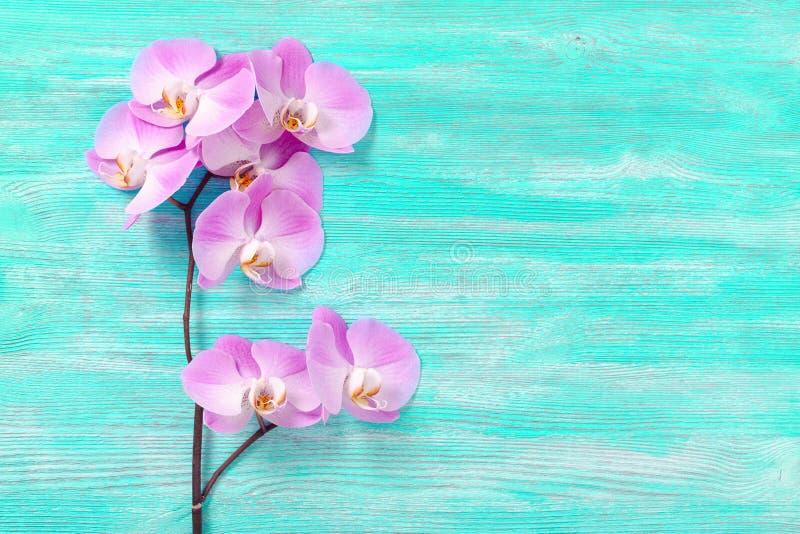 Den nya rosa orkidén blommar turkostappningträbakgrunden arkivfoton