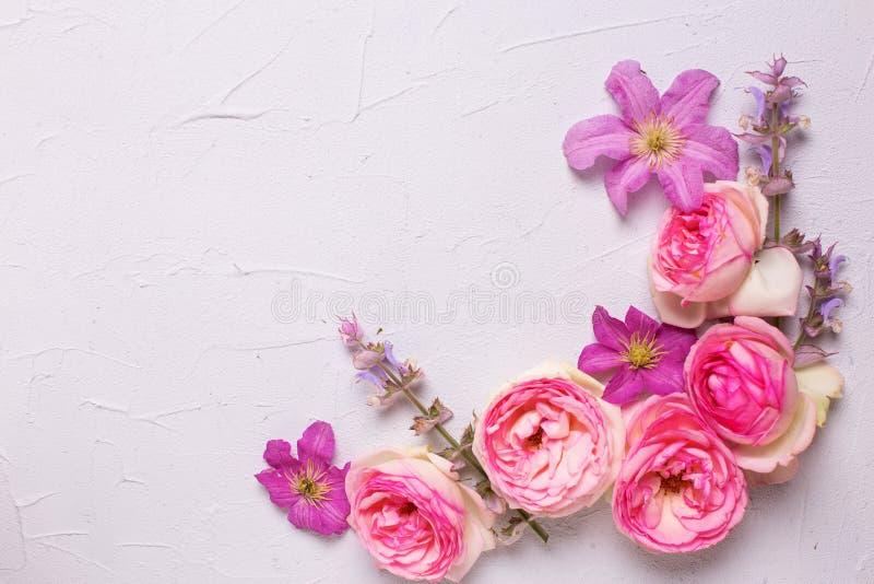 Den nya rosa violett sommarklematins för rosor och blommar på grå tex royaltyfria bilder