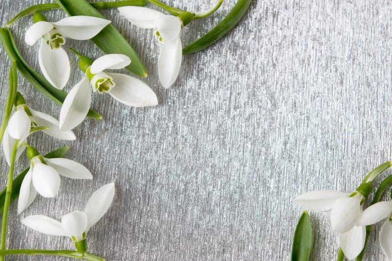 Den nya snödroppen blommar på silverbakgrund royaltyfri bild