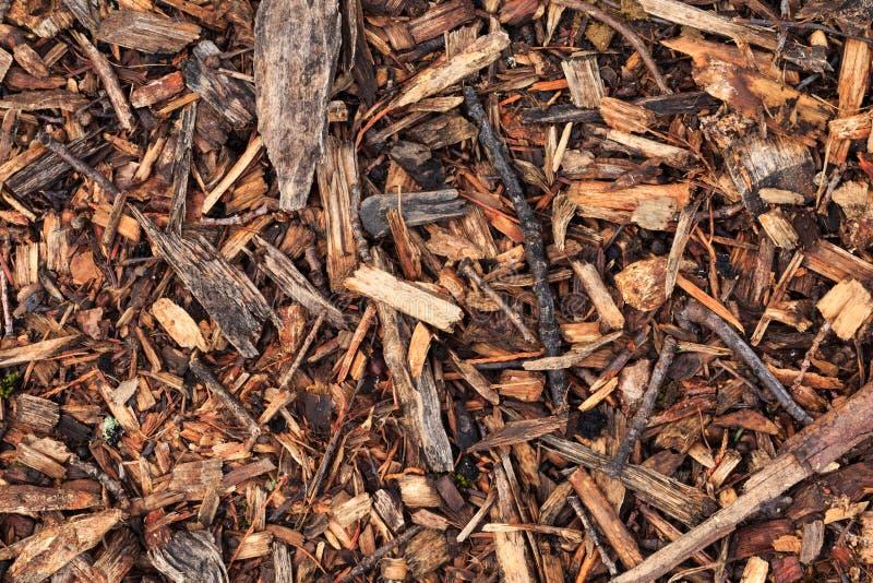 Den nya våta wood chipen från sörjer trädet fotografering för bildbyråer