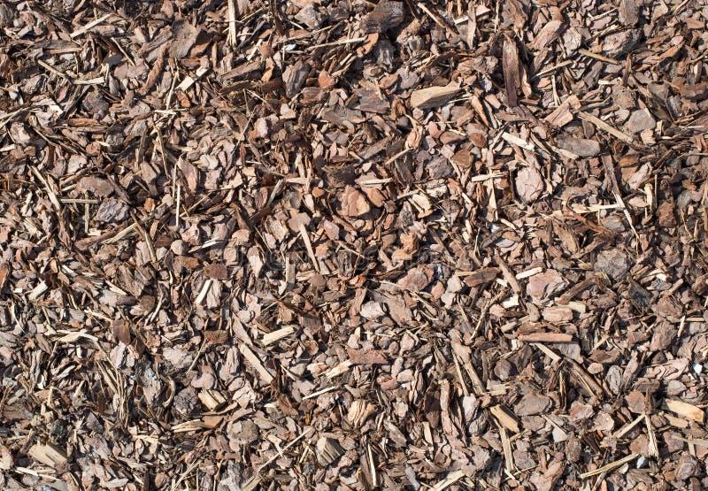 Den nya våta wood chipen från sörjer trädet, naturtextur royaltyfri bild