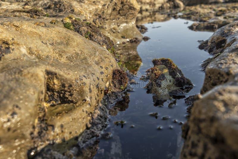 Den oceaniska tipsen med havsväxt och vaggar och marin- liv royaltyfri foto