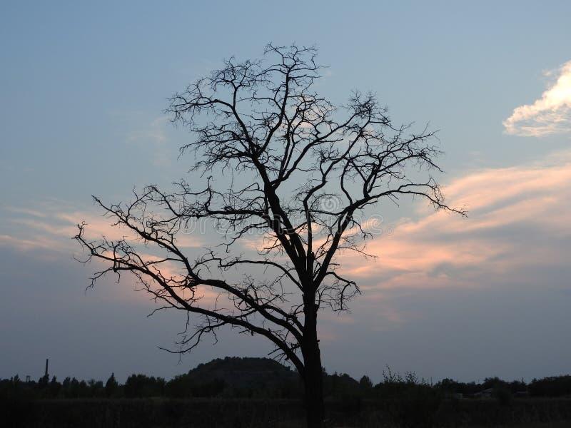 Den oförglömliga aftonsikten och det underbara trädet fotografering för bildbyråer