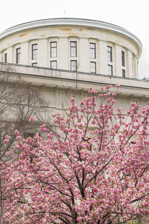 Den Ohio StatehouseCherry Blossoms Blooming Downtown Urban kärnan av Columbus arkivbilder
