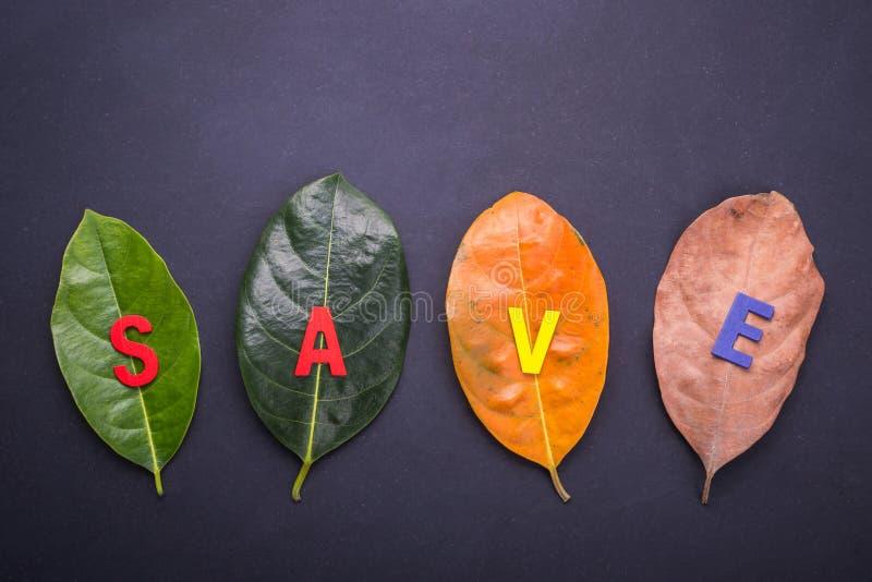 Den olika färg och åldern av sidor av jackfruitträdet lämnar f arkivfoto