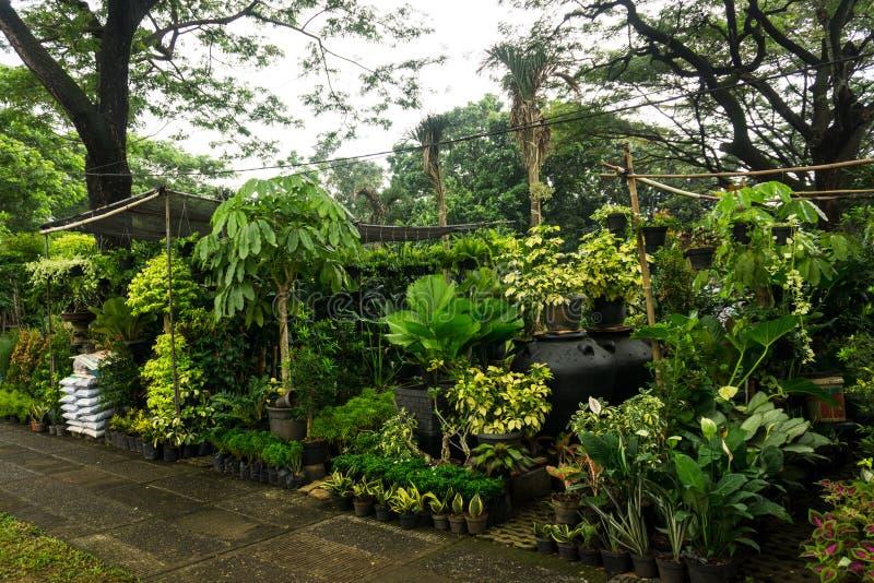 Den olika sorten av växten, blomman och gödningsmedel säljer vid blomsterhandlarefotoet som tas i Jakarta Indonesien royaltyfri fotografi