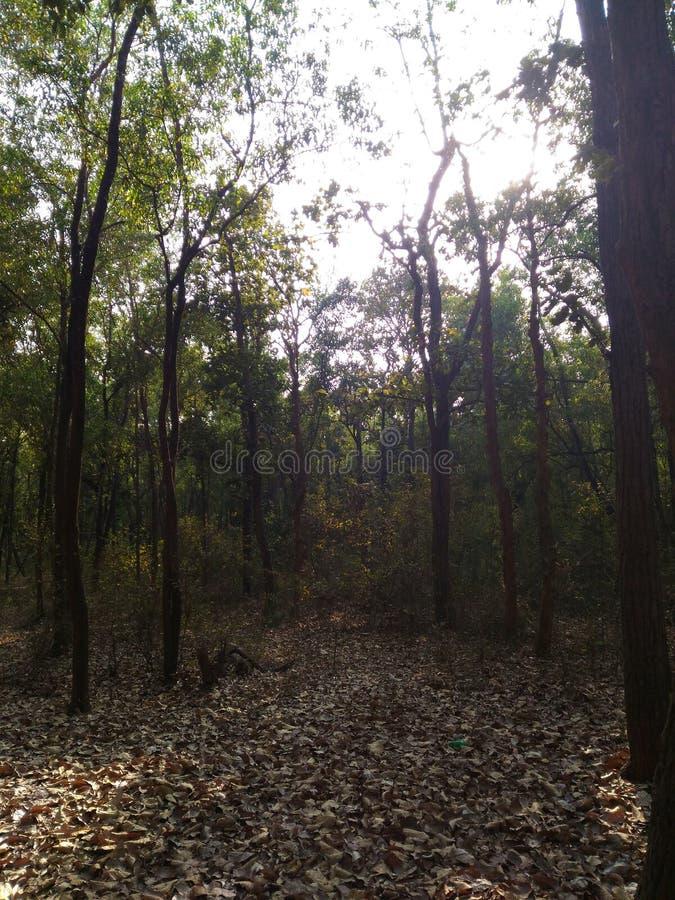 Den omättade vägen i en reservskog i Indien royaltyfria foton