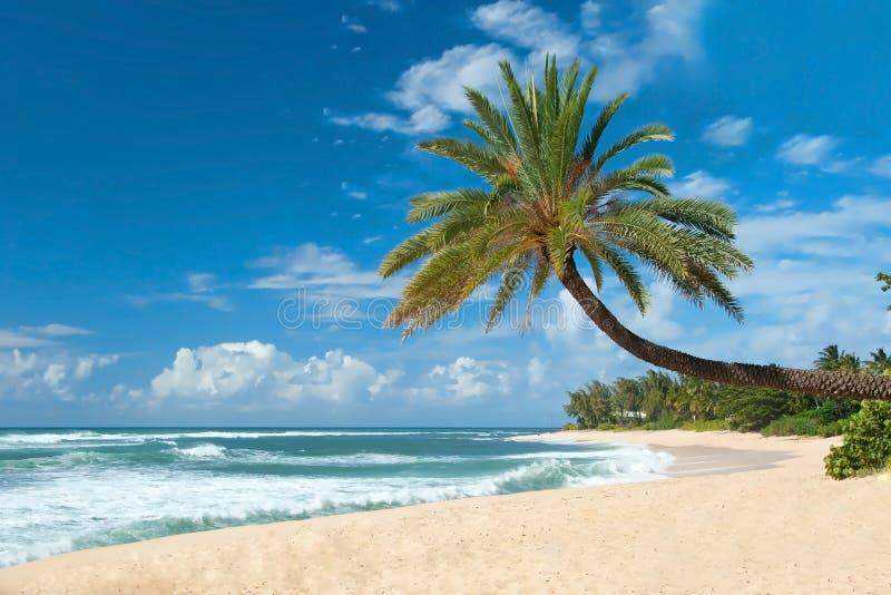 Den orörda sandiga stranden med gömma i handflatan träd och det azura havet royaltyfri foto