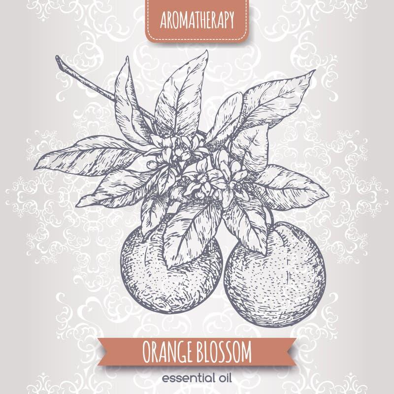 Den orange blomningen skissar på elegant snör åt bakgrund stock illustrationer