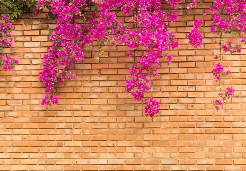 Den orange tegelstenväggen med rosa blommor texturerar bakgrund arkivbild