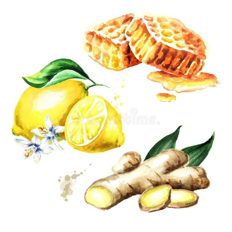 Den organisk ny ingefäran, citronen och honung ställde in Dragen illustration för vattenfärg som hand isoleras på vit bakgrund royaltyfri illustrationer