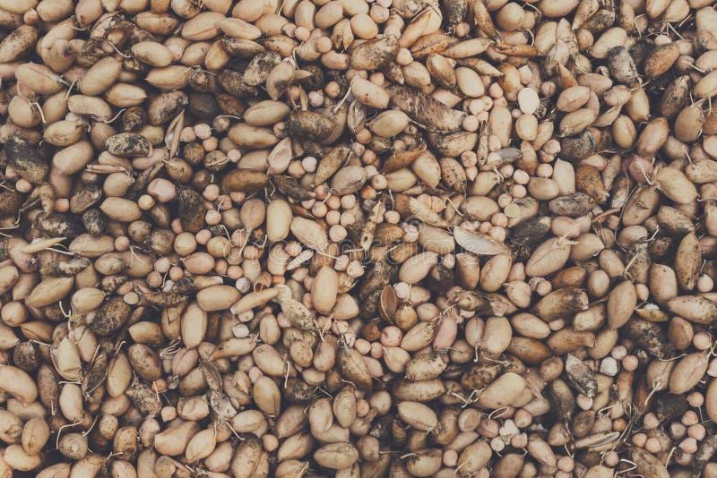 Den organiska potatisen samlade på den ekologiska lantgården, bakgrund arkivbild