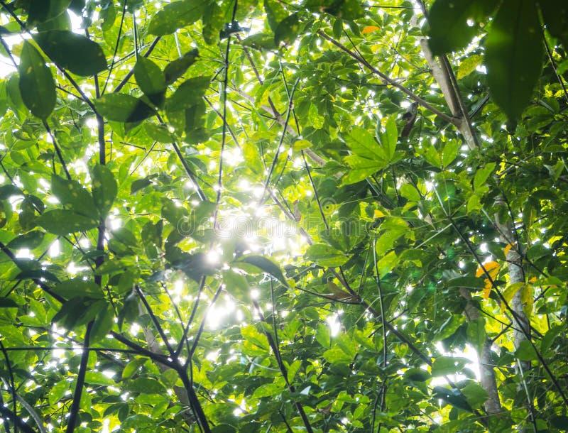 Den oskarpa ljusa designbakgrunden av bokehljus från solljuspasserande till och med gröna sidor arkivfoto