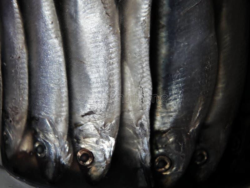 Den på burk liten stackarebehållaren som överbefolkas med fisken arkivbild