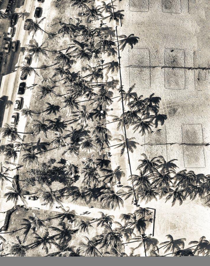 Den panorama- över huvudet sikten av Miami Beach Lummus parkerar och havet Dri royaltyfri bild