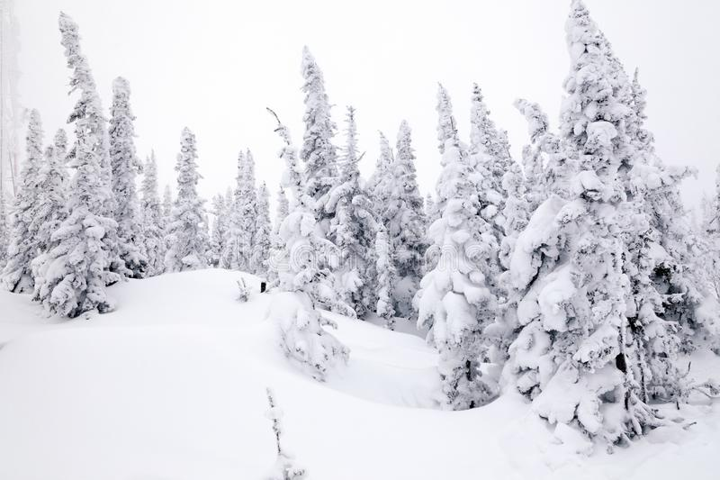 Den panorama- sceniska sikten från överkant av berglandskap övervintrar val arkivfoton