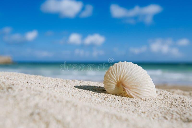 Den pappers- nautilusen beskjuter med hav, stranden och seascape royaltyfri bild