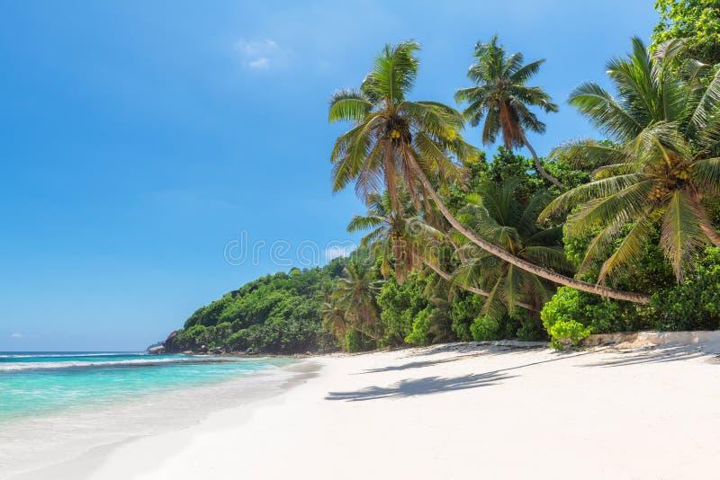 Den Paradise stranden med kokosn?ten g?mma i handflatan ?ver det vita sand- och turkoshavet p? den exotiska ?n arkivfoton