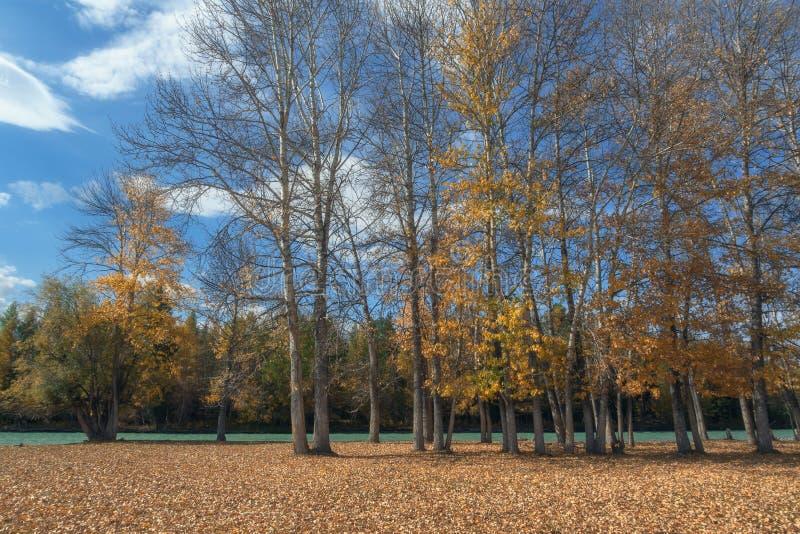 Den pittoreska höstskogen längs floden mot en ljus blå himmel royaltyfri foto
