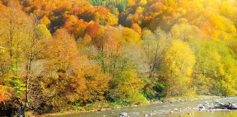 Den pittoreska h?sten landskap Gul skog- och bergflod Brett foto arkivbild