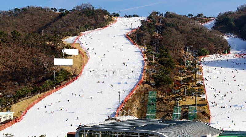 Den populära vintern skidar sportar royaltyfria bilder