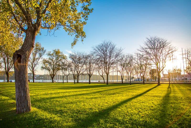 Den Portugal Lissabon, Tagus River invallningen Solnedgång på gräsmattan med grönt gräs bland träden royaltyfri foto