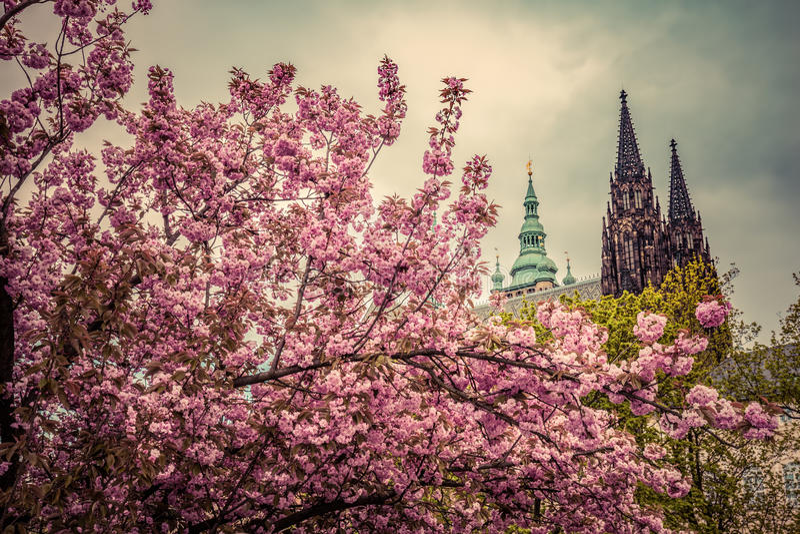 Den Prague slotten med St Vitus Cathedral, Hradcany, Tjeckien som sedd från våren arbeta i trädgården fotografering för bildbyråer