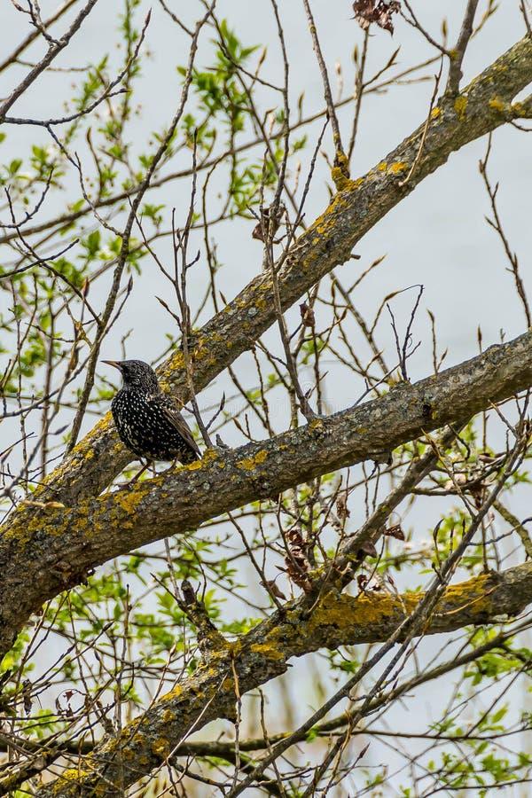 Den prickiga nötknäpparen på trädet royaltyfri bild