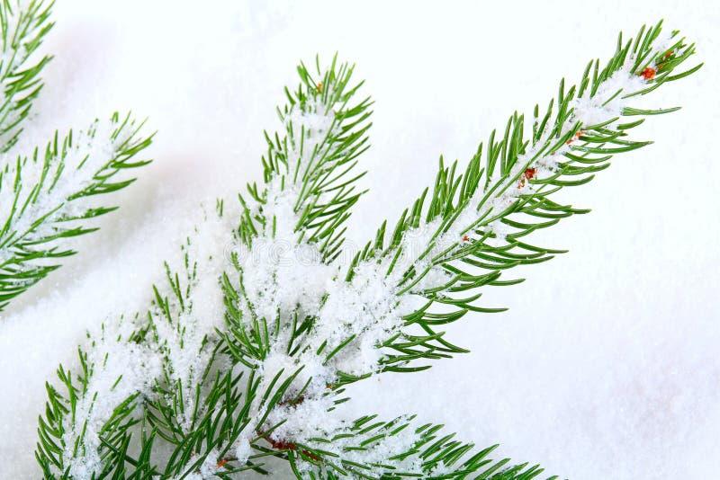 den räknade filialen sörjer snow arkivbild