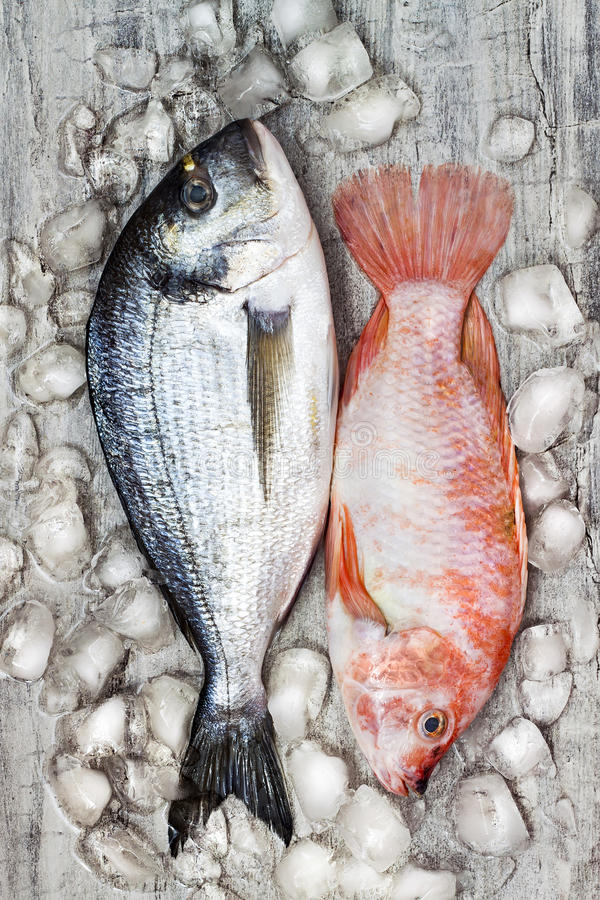 Den rå nya doradaen och röd tilapia fiskar på is kulinarisk laxskaldjur för bakgrund Bästa sikt, stilleben royaltyfri foto