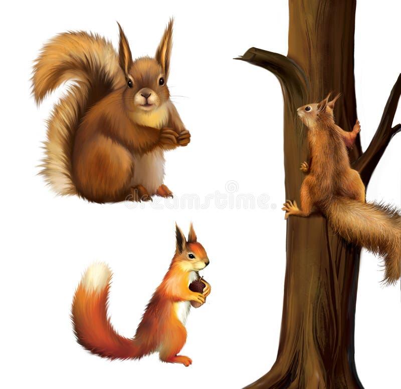 Den röda ekorren som äter en rotting, behandla som ett barn ekorren, den röda ekorren för eurasianen - den vulgaris sciurusen. Iso vektor illustrationer