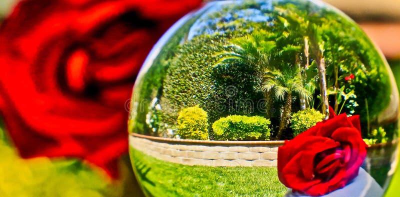 Den röda fotoreflexionsbollen steg fotografering för bildbyråer
