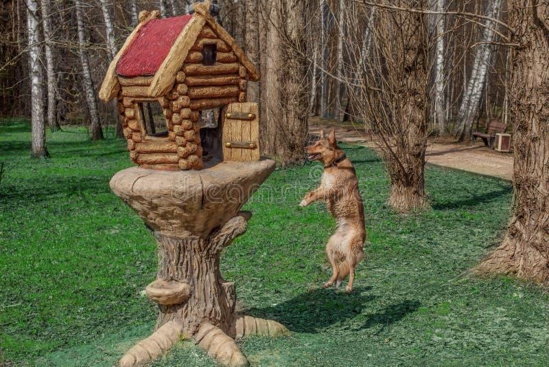 Den röda hunden säger till en scuirrel`-hej kompis! Lyssnar jag är inte en räv, l f.m. en fågel Inte säkert? Se mig kan flyga Kan arkivbilder
