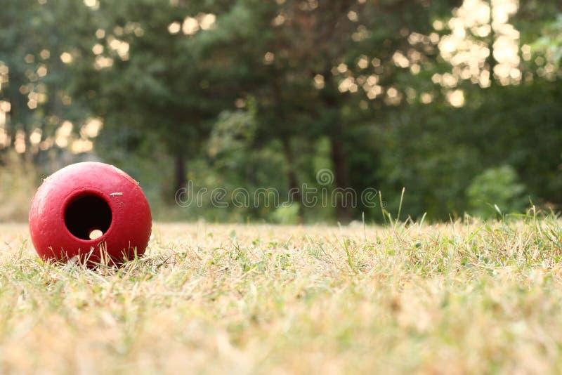 Den röda hundleksaken lägger i det gröna gula gräset arkivfoto