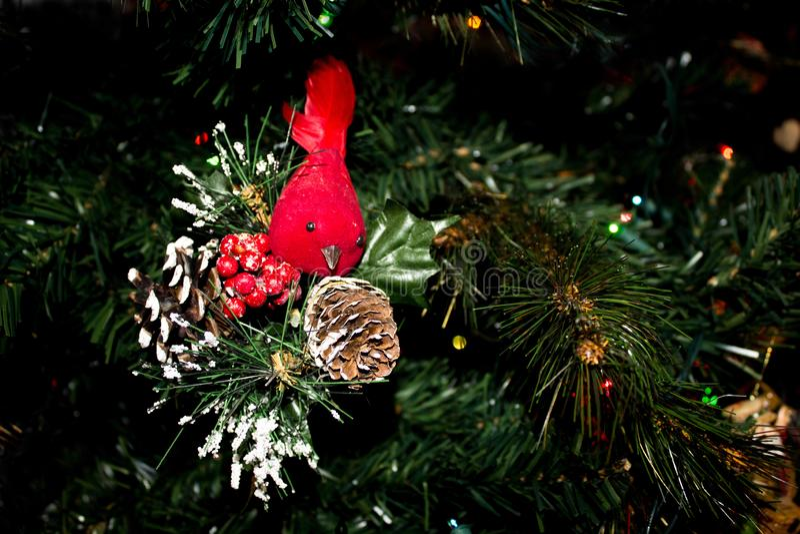 Den röda kardinalen Ornament och snöig sörjer kottar på en julgran royaltyfri bild