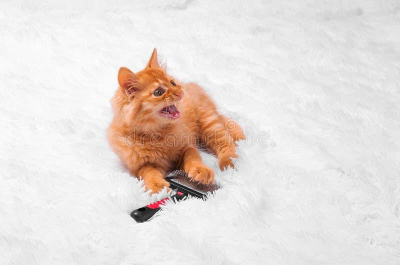 Den röda kattungen på en vit bakgrund spelar blicklögner arkivfoto