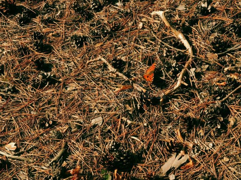 Den röda orange fjärilen på jordning bland tjänstledighetskräpet, ek avmaskar och sörjer sugrör royaltyfri fotografi