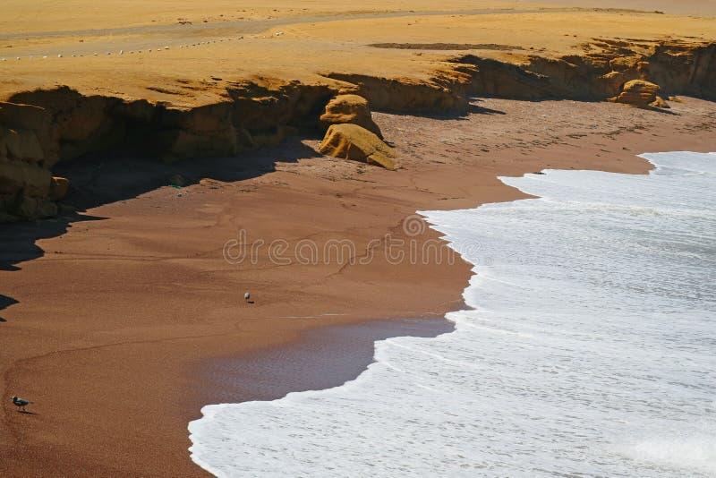 Den röda stranden eller Playaen Roja med rent vitt vågskum från Stilla havet, Paracas nationell reserv i Peru royaltyfri bild