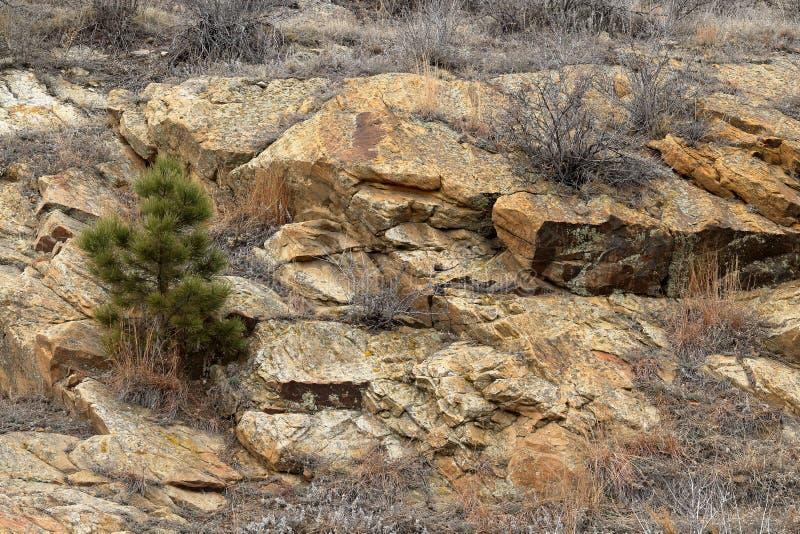 Den röda vintern vaggar parkerar landskap i Rocky Mountains arkivbilder