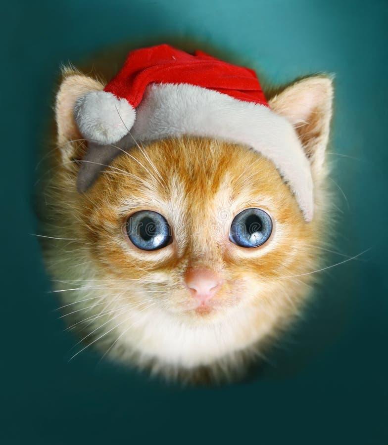 Den rödhåriga kattungen ser sitter upp i skåpasken royaltyfri foto