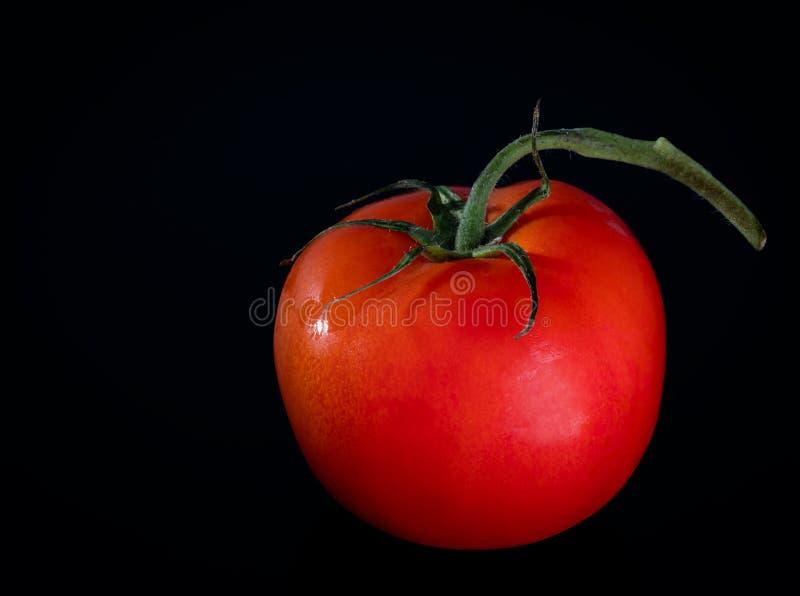 Den r?da tomaten ligger p? tabellen royaltyfri bild