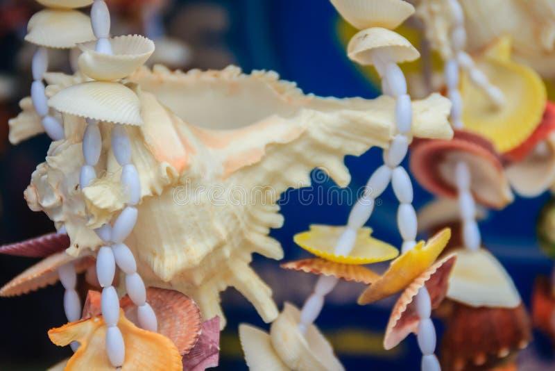 Den Ramose murexen beskjuter till salu på strandmarknaden Chicoreus ramo arkivfoton