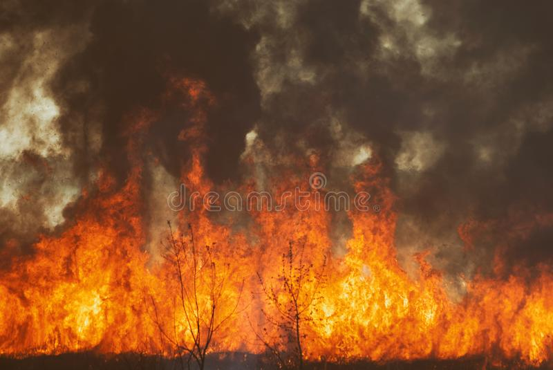 Den rasa flamman av brandbrännskadan i fälten, skogarna och den svarta tjocka beska röken Stor löpeldnärbild royaltyfri fotografi