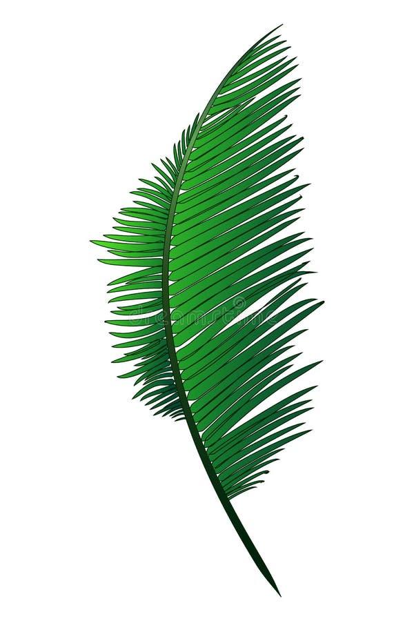 Den realistiska gröna filialen av den tropiska kokosnöten gömma i handflatan royaltyfri foto