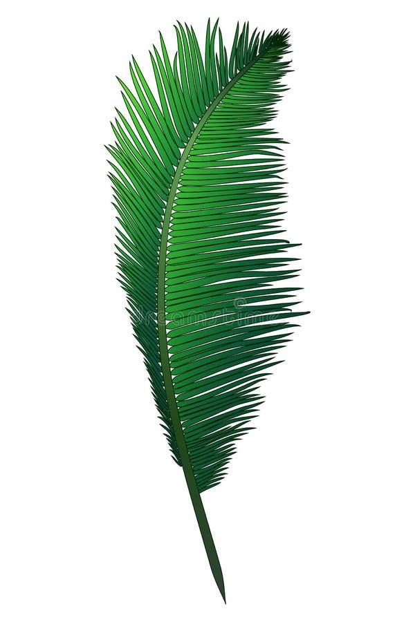 Den realistiska gröna filialen av den tropiska kokosnöten gömma i handflatan royaltyfri bild