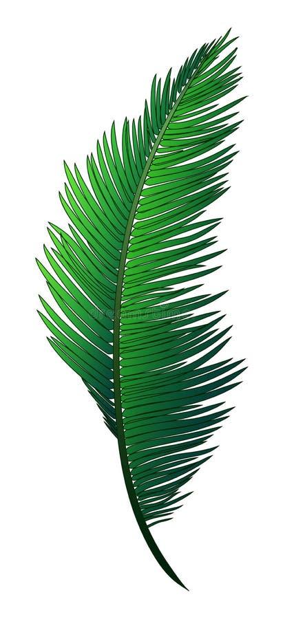 Den realistiska gröna filialen av den tropiska kokosnöten gömma i handflatan arkivfoton