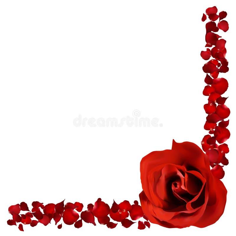 den realistiska röda rosen och kronblad gränsar, blommar vektorillustrationen royaltyfri illustrationer