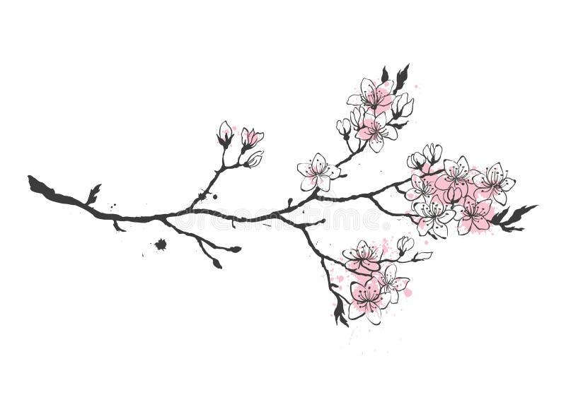 Den realistiska sakura Japan körsbärsröda filialen med att blomma blommar vektor illustrationer