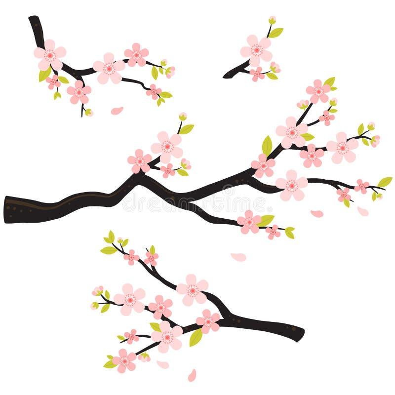 Den realistiska sakura Japan körsbärsröda filialen med att blomma blommar royaltyfri illustrationer