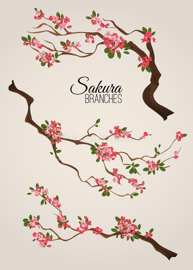 Den realistiska sakura Japan körsbärsröda filialen med att blomma blommar vektorillustrationen vektor illustrationer